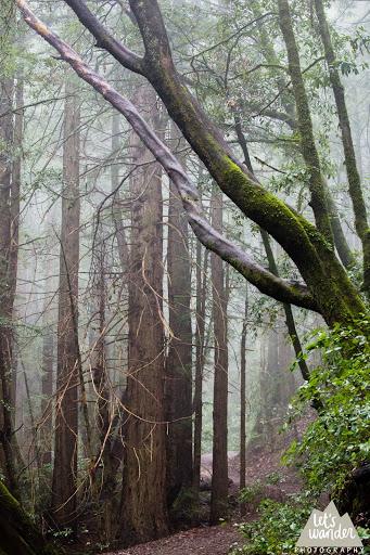 woodside 2