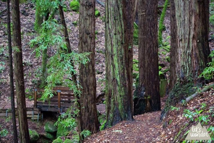 woodside 3